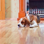 Hardwood Floor Installation and Refinishing Specialist