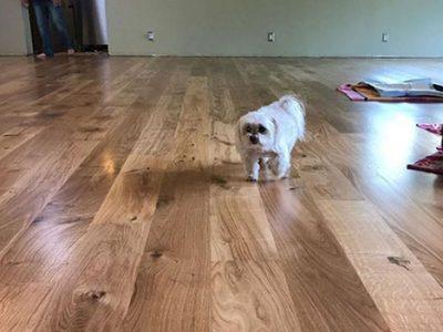 taking care of hardwood floors with pets   West Coast Floor Company, Napa, CA 94559